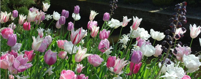 Tulip Collection (Bridemaid)