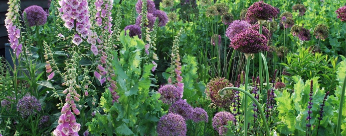 Alliums in Quadrant bed